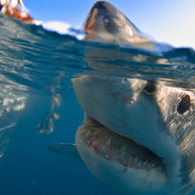 SHARK-NEXT-TO-CAGE