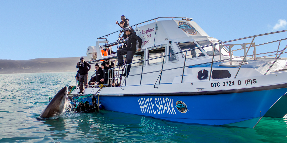 White Shark Diving Company tours