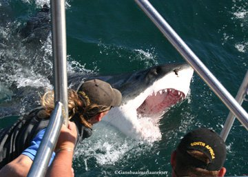 Shark cage diving trip