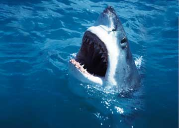 Jaws: Real Life is Better