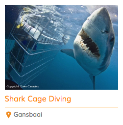 1 Day Shark Cage Package
