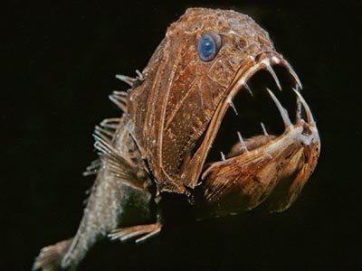 The Fangtooth Fish