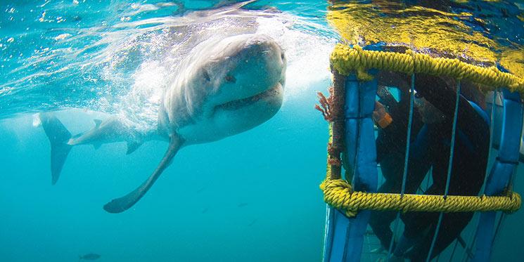 shark genetics