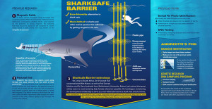Shark conservation