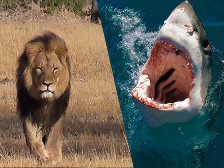 Shark & Safari Combo Special