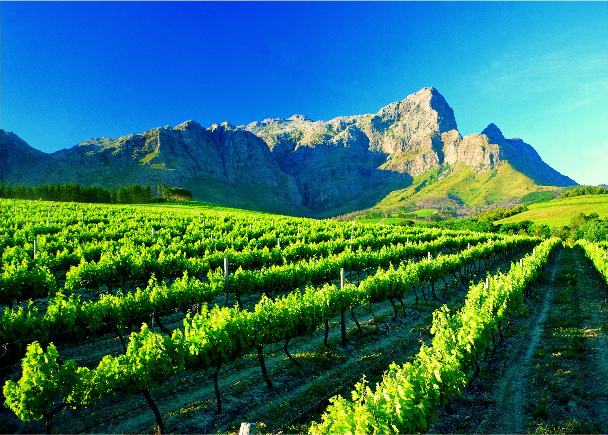 Winelands Cycle 1