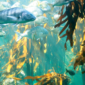 Forests of the Ocean: Incredible Kelp