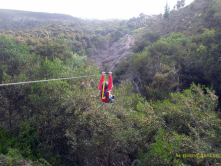 Shark Cage Diving and Zip Lining adventure tours