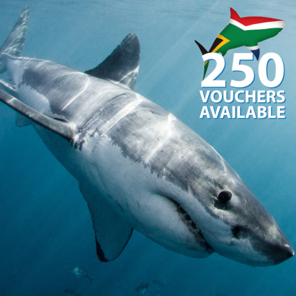 Shark cage diving gift voucher