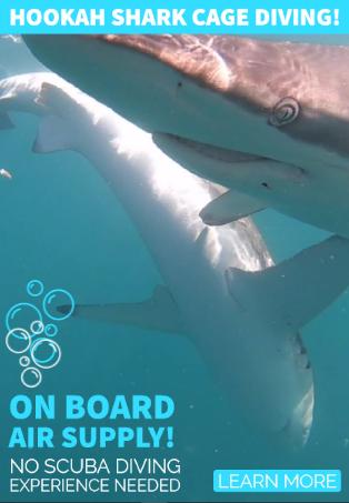 Hookah shark cage diving