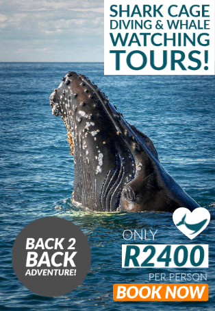 Shark cage diving and whale watching special with White Shark Diving Company in Cape Town