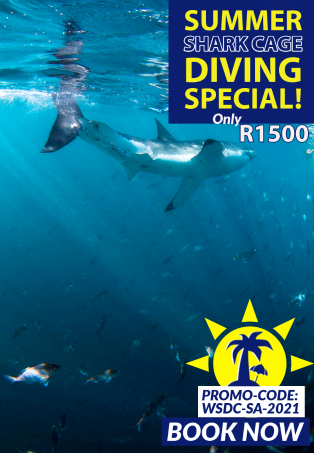 Dive with sharks in South Africa - Summer cage Diving Special 2021