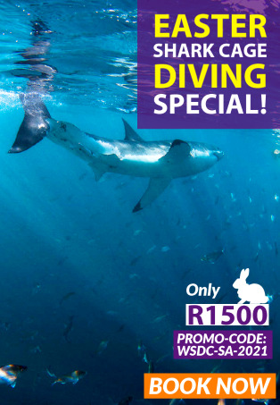 Easter Special with White Shark Diving Company