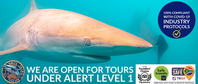 White Shark Diving Company is open and running tours under Alert-Level 1 of the Lock-down.
