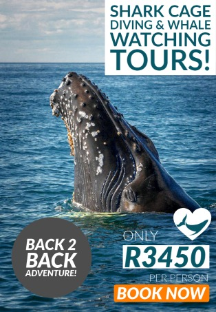 Whale watching and shark cage diving COMBO tours! Gansbaai 2021!
