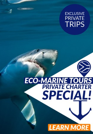 Private charter special with White Shark Diving Company!