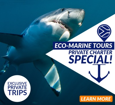 White Shark Diving Company Private Charter Special 2021