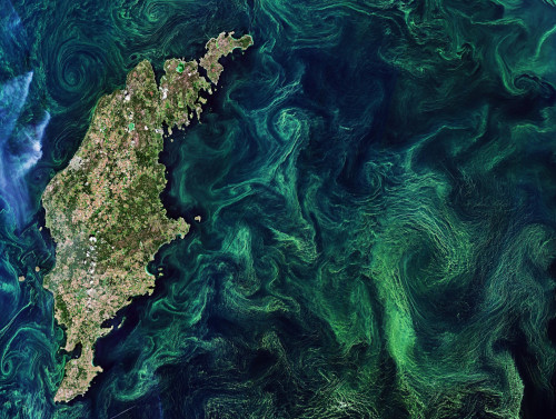 Oxygen producing algae blooms