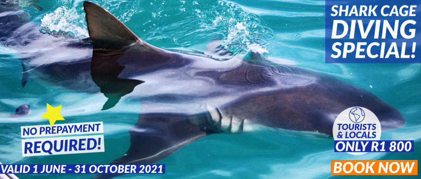 White Shark Diving Company 2021 Special