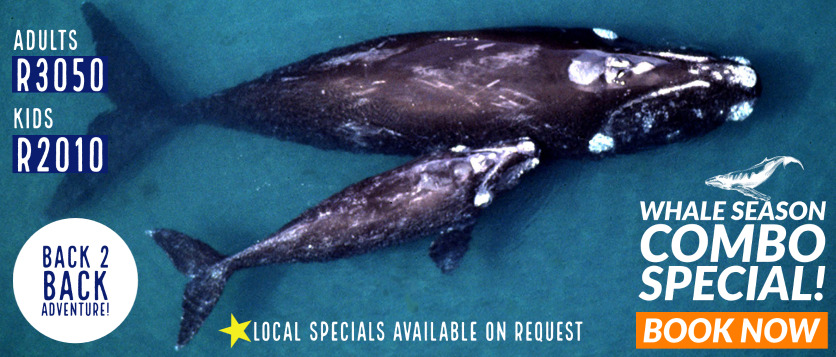 2021 Whale watching Combospecial in Hermanus