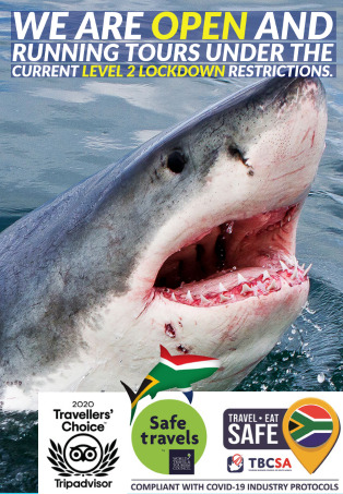White Shark Diving Company is open under level 2!