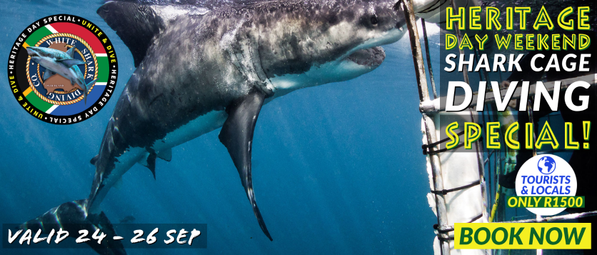 White Shark Diving Company Heritage Weekend 2021 Special!