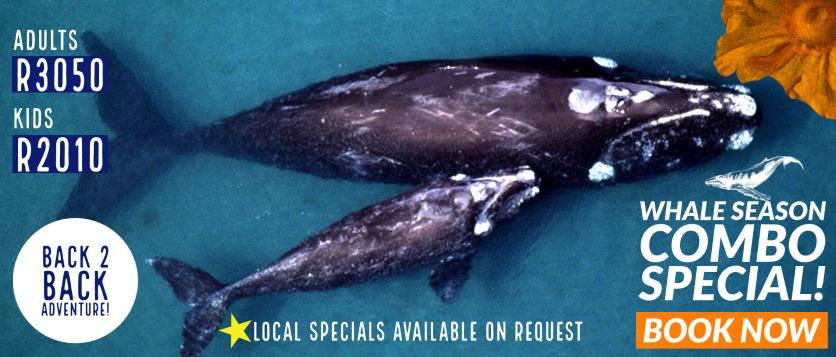 Whale Season 2021 Whale Watching
